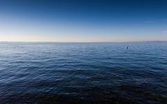 La belva del mare
