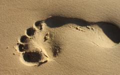 L'impronta dell'assassino
