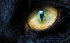 L'occhio di gatto