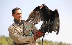Avvoltoi poliziotti al posto dei cani? Un disastro